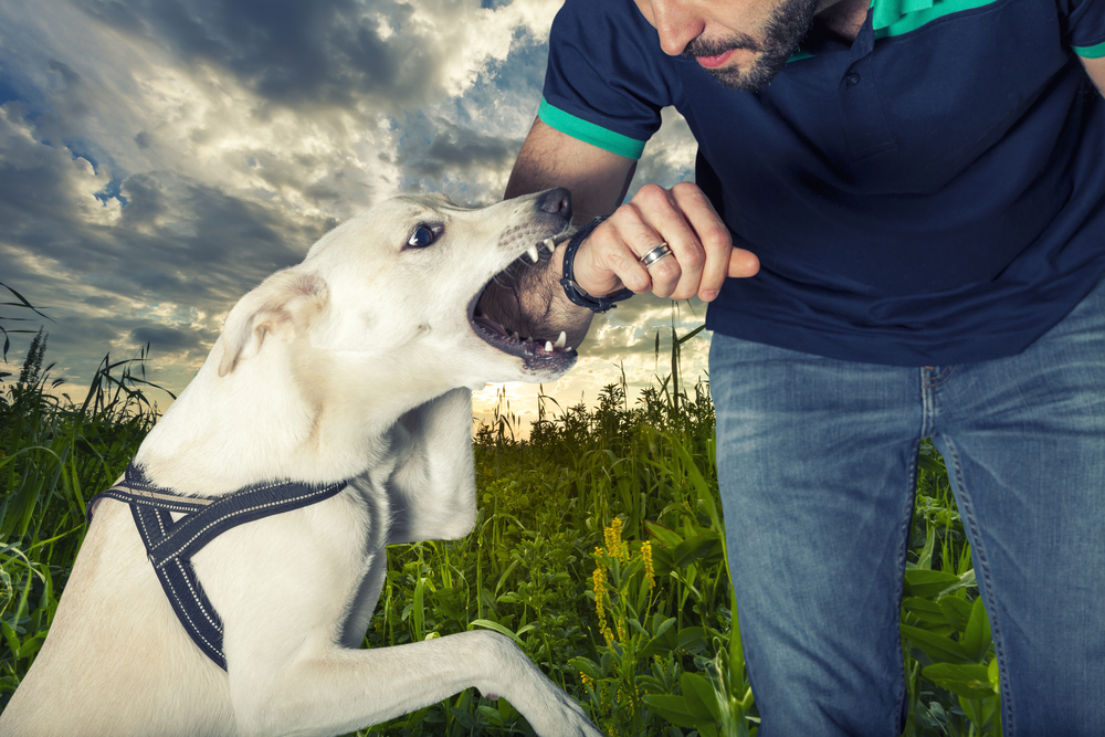 Things You Should Know About Dog Bite Lawsuits